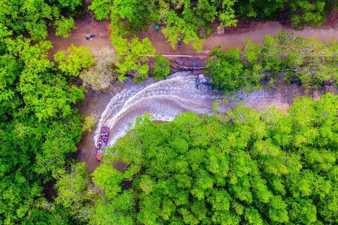Khám phá rừng Cần Giờ -